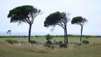 Stromy jsou ohnuté od stále vanoucího větru