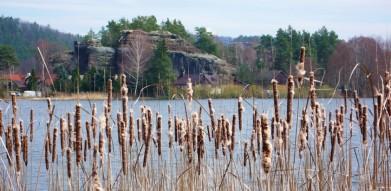 Komárovský rybník v Českém ráji