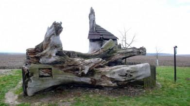 Semtínská lípa, vysazena okolo 1700, spadla v roce 2000