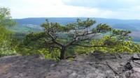 Sklaní stromy rostou zvláštně