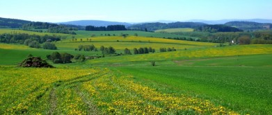 Krajina u Plánice, v pozadí Šumava