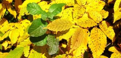 Podzim, polovina října. Posázaví.