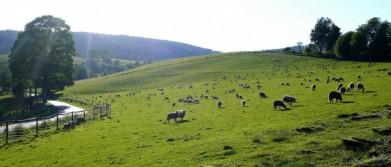 Cesta u Račí, z Horní Vltavice na Borovou Ladu na Šumavě