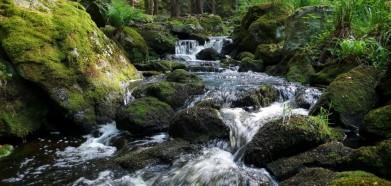 Huťský potok v Novohradských horách