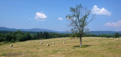 Výhled z cyklostezky Horní Planá - Nová Pec na Šumavě, v pozadí je vidět Plechý (1 378 m), nejvyšší hora české části Šumavy.
