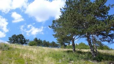 Jižní svahy skály nad Hostimí