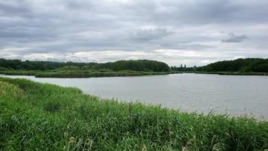 Přírodní rezervace Bohdanečský rybník
