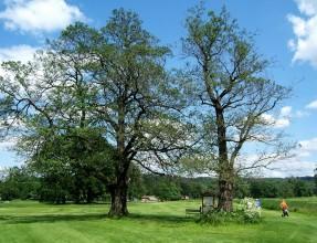 Dva stromy u jamky č. 9, viz snímek č. 4 v nové galerii