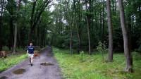 Klánovický les, o který jde. Bude se kácet?