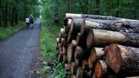 Rovné stezky v Klánovickém lese