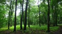 Les na Závisti